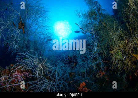 A beautiful view of a pristine underwater coral garden with blue water. - Stock Photo