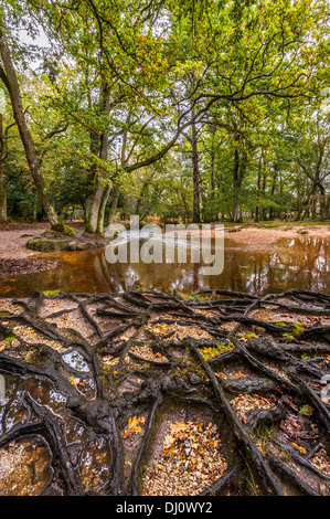 Ober Water New Forest Hampshire - Stock Photo