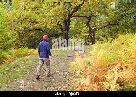 Haugh Wood, Wharfedale, Yorkshire Dales National Park, England, UK. October 2013. - Stock Photo