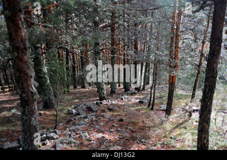Forest in Peñalara, highest mountain peak in the mountain range of Guadarrama, Spain - Stock Photo
