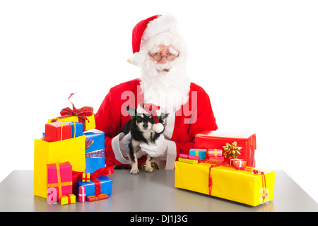 Little chihuahua between the colorful Christmas gifts holding by Santa Claus - Stock Photo