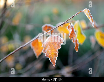 Calverton, Nottinghamshire, UK.19th November 2013. Beautiful Autumn Morning and a touch of frost in Nottinghamshire - Stock Photo