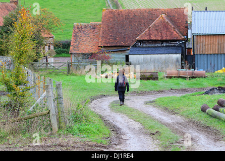 Lady Rambler on an English Rural Track through a Farmyard - Stock Photo