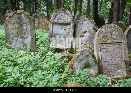 hillside jewish personals A comprehensive listing of hillside synagogues, hillside shuls and hillsidejewish temples from mavensearch, the jewish directory.
