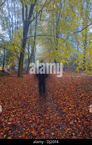 A man walking through autumnal woodland. - Stock Photo