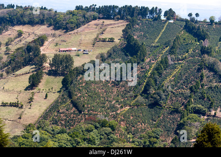 A hillside coffee plantation in Costa Rica - Stock Photo