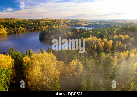 Steam above the forest on an early autumn morning in Aulanko nature conservation area in Finland. - Stock Photo