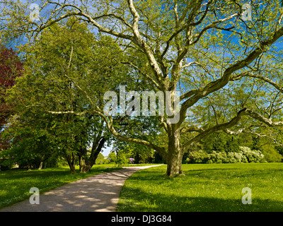 Park Belvedere, Weimar, Thuringia, Germany Stock Photo