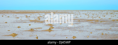 danish wadden sea national park - Stock Photo