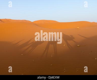 Sahara desert - shadows of a camel train on the sand dunes - Stock Photo