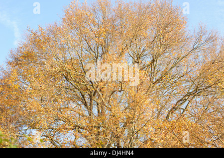 Horizontal portrait of lonely oak tree on a hazy day in winter in Arjuzanx National Hunting and Wildlife Reserve. - Stock Photo