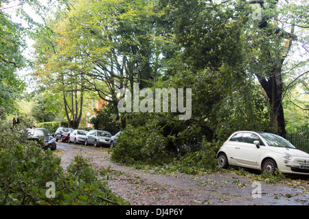 Damage after 27 October 2013 Storm - Queens Wood - Haringey - London - Stock Photo