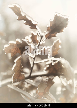 Frozen branch of oak tree with leaves covered with ice. Artistic abstract fall nature closeup. - Stock Photo