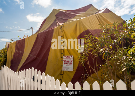 Fumigation of a house. A colourful tent covers a house as it is gassed to & Fumigation of a house. A colourful tent covers a house as it is ...