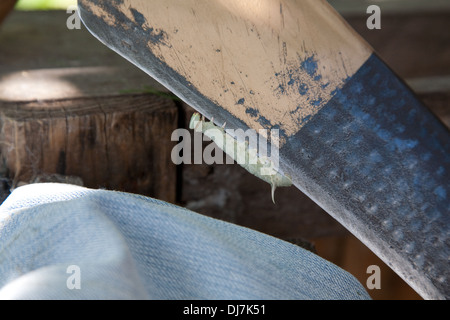 caterpillar on the edge of blade - Stock Photo