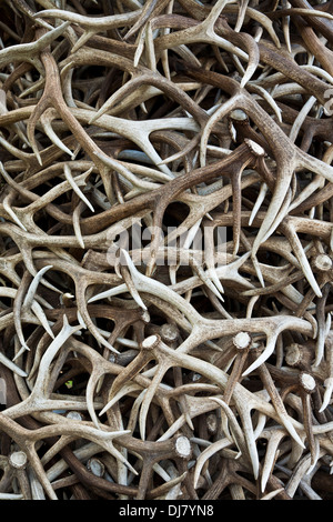 Close up of elk buck antlers in a merging abstract pattern, wallpaper concept, Jackson Hole, Wyoming, USA, stag - Stock Photo