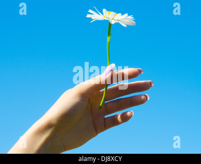 camomile in a hand agaist blue sky - Stock Photo