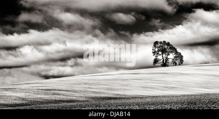 Minimalist monochrome image of a lone tree atop a sloping chalky field in Wiltshire, UK. - Stock Photo