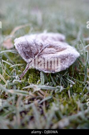 Cologne, Germany. 26th Nov, 2013. Hoar frost covers grass and a wilted leaf after a clear and frosty night in Cologne, - Stock Photo