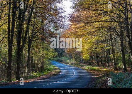 Bend in road in Tidenham Chase, Forest of Dean, Gloucestershire England UK with fallen leaves - Stock Photo