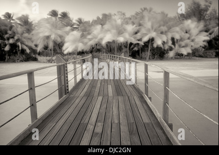 Boardwalk into palm trees blowing in the wind. French Polynesia - Stock Photo