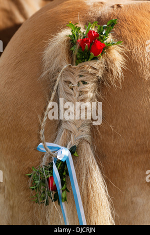 Germany, Upper Bavaria, Wildsteig, Horse tail decorated for Leonhardi prcession - Stock Photo