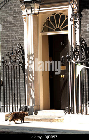 Atmosphere Larry The Cat arrives outside 10 Downing Street, ahead of a press conference London, England - 26.07.12 - Stock Photo
