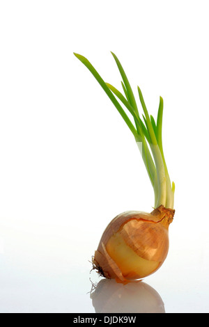 One sprouting onion - Stock Photo
