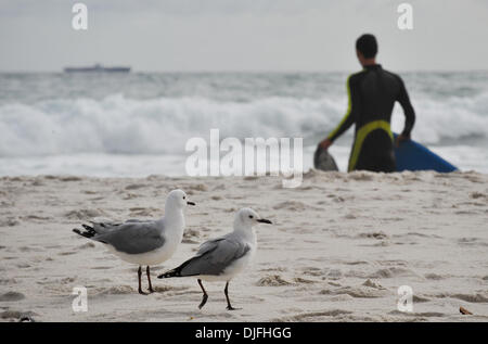 June 13, 2010 - Cape Town, SOUTH AFRICA - Seagulls walk on the beach in the Camps Bay suburb of Cape Town Sunday, June 13, 2010 in South Africa. (Credit Image: © Mark Sobhani/ZUMApress.com)