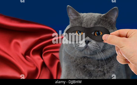 super-hero cat - Stock Photo