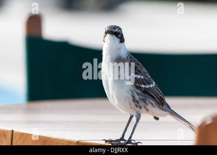 Friendly Finch - Stock Photo