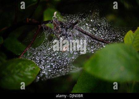 A spider's web covered in rain drops. - Stock Photo