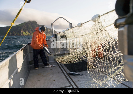 Salmon Fishing In Front Of Cape Pankoff On Unimak Island In The Alaska Department Of Fish And Game 'alaska Peninsula - Stock Photo