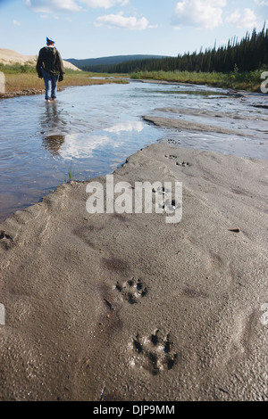 Wolf Tracks And A Woman Walking Barefoot In A Creek Along The Edge Of The Great Kobuk Sand Dunes, Kobuk Valley National - Stock Photo