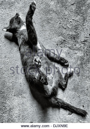 A cat frozen in free-fall rigour mortis, from the roof of an apartment block, in the Sathorn district of Bangkok, - Stock Photo