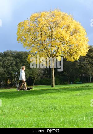 An old woman walking her dog in the park in Autumn - Stock Photo