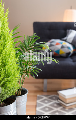 Green plants in the living room, with sofa, lamp and books in the background. - Stock Photo