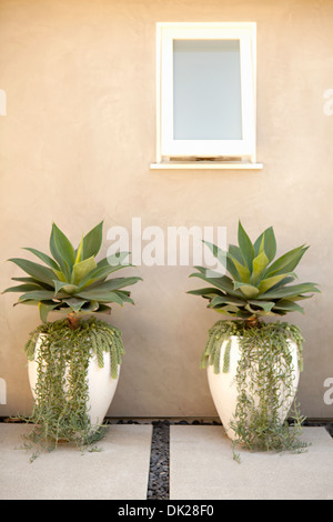 Symmetrical succulent plants and ivy growing in flowerpots on patio - Stock Photo