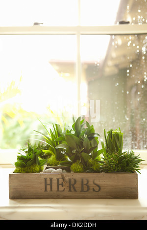 Variety of green herbs growing in kitchen window box - Stock Photo