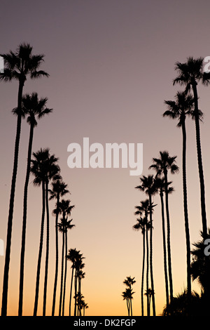 Low angle view of tall silhouetted palm trees against sunset sky, Corona del Mar, California, United States - Stock Photo