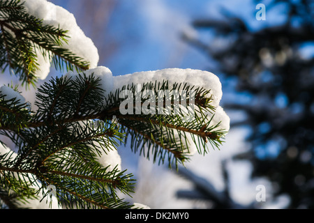 Christmas Tree 7. Closeup view of a spruce tree, covered with fresh snow. The evergreen joyfulness of Christmas - Stock Photo