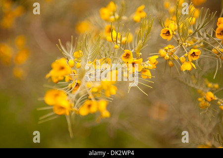 Close up of yellow wildflowers on branch - Stock Photo