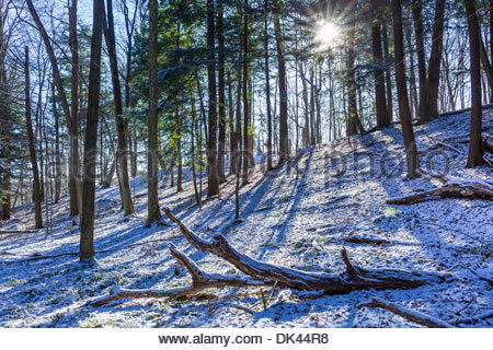 After the first snowstorm of the season in the forest of Rouge National Urban Park inside Toronto Ontario Canada. - Stock Photo