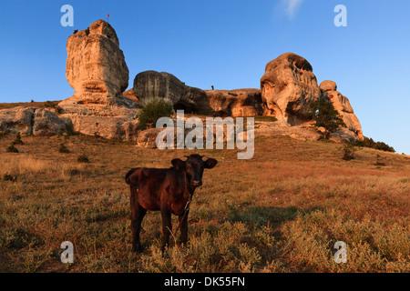 Cow on the background of rocks. Bakhchisaray, Crimea. - Stock Photo