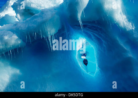 Antarctica, Icicles hang from iceberg near Enterprise Island in Wilhelmina Bay along Antarctic Peninsula - Stock Photo