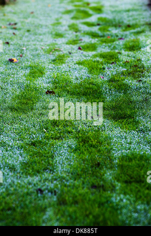 Footprints on dew covered grass - Stock Photo