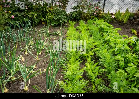 Vegetables in small garden plot with bark paths stock for Vegetable patch in small garden
