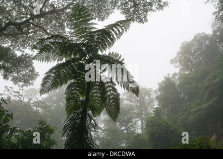 Monteverde Cloud forest of Costa Rica. - Stock Photo