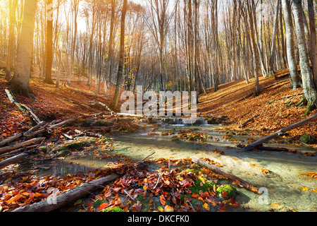Wild mountain river in the autumn forest - Stock Photo