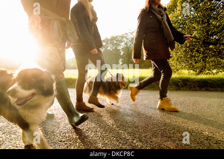 Senior couple and granddaughter walking dogs, Norfolk, UK - Stock Photo